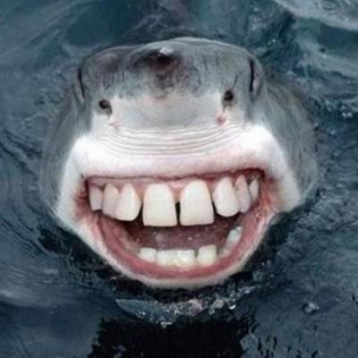 Reporter Shark4You